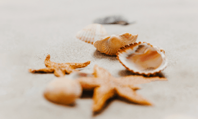 Terapia Shells